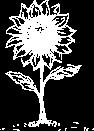 huile-de-tournesol